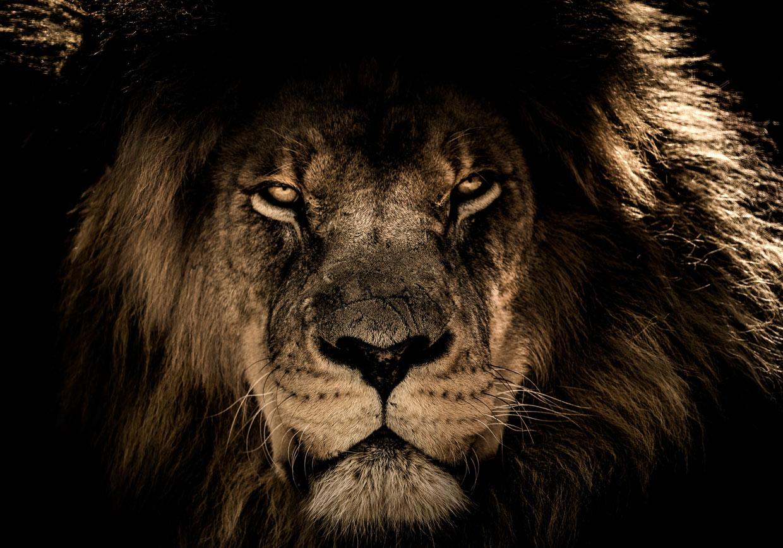 lionclaws-starting-slider-neu